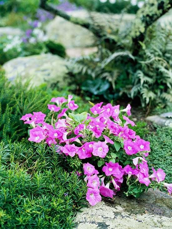 Steingarten anlegen und bepflanzen  Gestaltungsideen fr Hobbygrtner