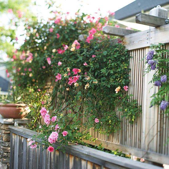 hoher sichtschutz pflanzen sichtschutz fur garten schirmen sie mit, Garten und erstellen