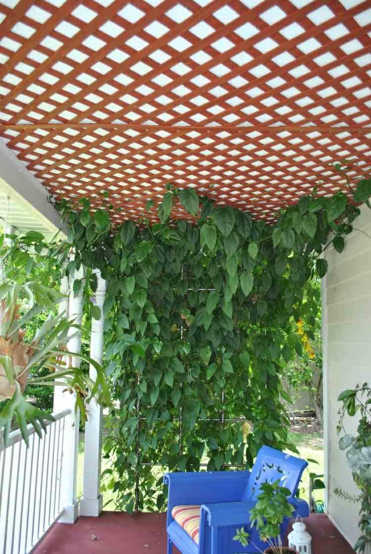 Sichtschutz Fur Garten Schirmen Sie Mit Blumen Und Pflanzen Ab ... Wind Und Sichtschutz Fur Balkon Mit Blumen Und Kletterpflanzen