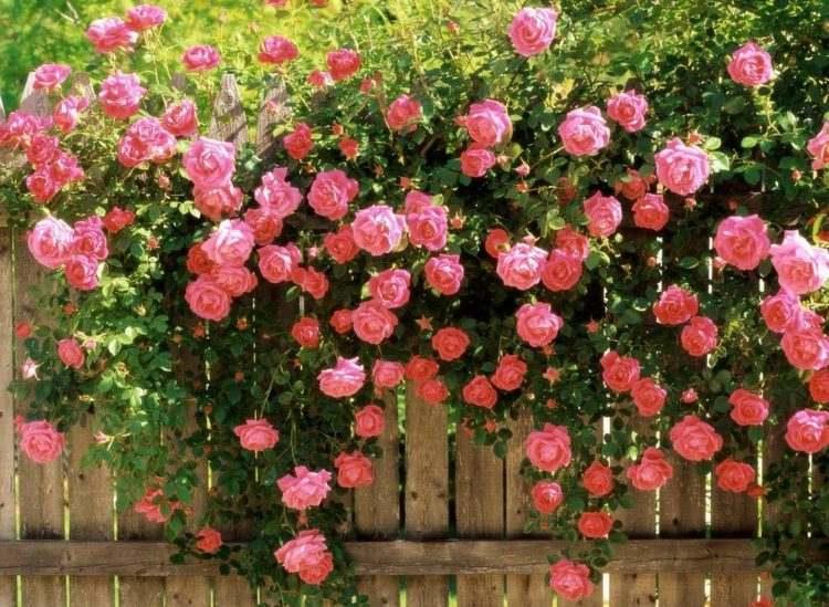 sichtschutz fur garten schirmen sie mit blumen und pflanzen ab | enqui, Garten und erstellen