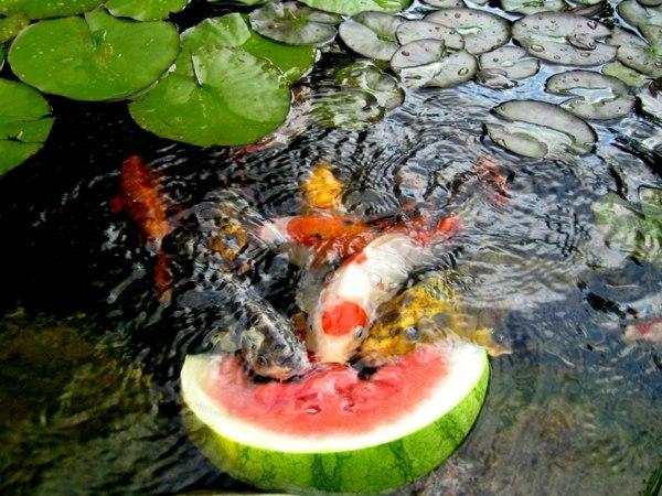 gartenteich bilder japanischer garten ideen wasserpflanzen teich, Garten dekoo