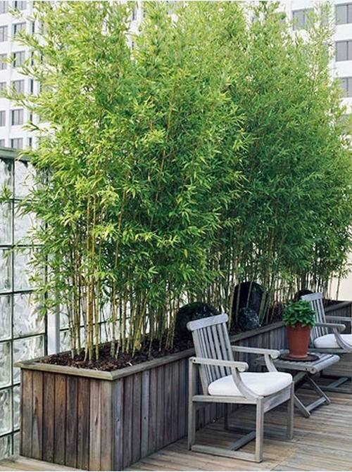 Garden Screening Ideas