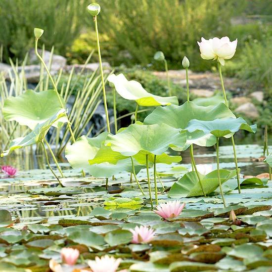 gartenteich neu anlegen tipps fur erfolgreichen wassergarten umbau,