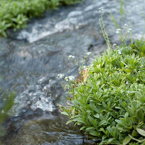wassergarten anlegen teich pflanzen wie sie einen wassergarten, Gartenarbeit