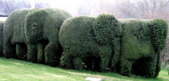 sichtschutz hecke pflanzen sichtschutz hecke schneiden garten, Garten dekoo