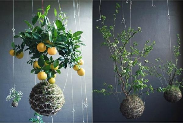 20 Ideen fr hngende Blumentpfe mit Zimmerpflanzen