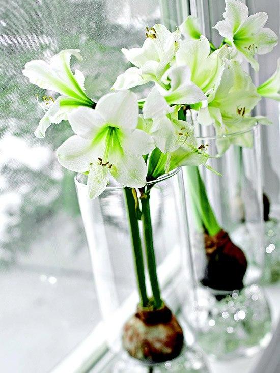 Winter blhende Pflanzen als herrliche Weihnachtsdekoration