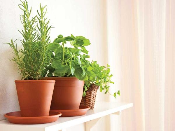 Krutergarten anlegen  Indoor Garten Tipps fr Kchenkruter anbauen