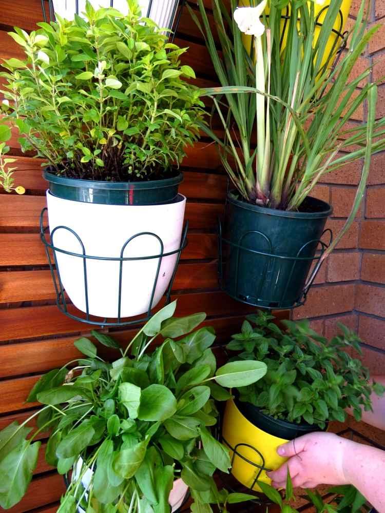 13 Kruter und Pflanzen die wir zu Hause im Topf anbauen