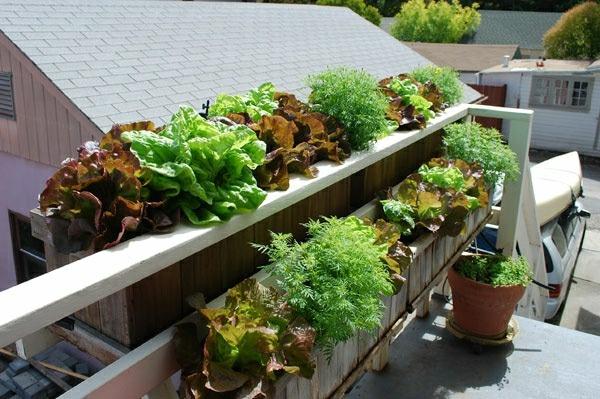 deck vegetable garden ideas growing vegetable gardens on a deck, Gartengerate ideen