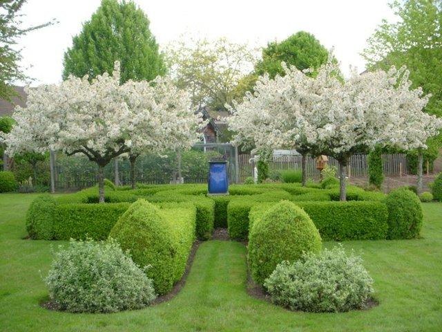 wuchsbaum schneiden pflegen tipps ideen rasen ideen fur, Garten und erstellen