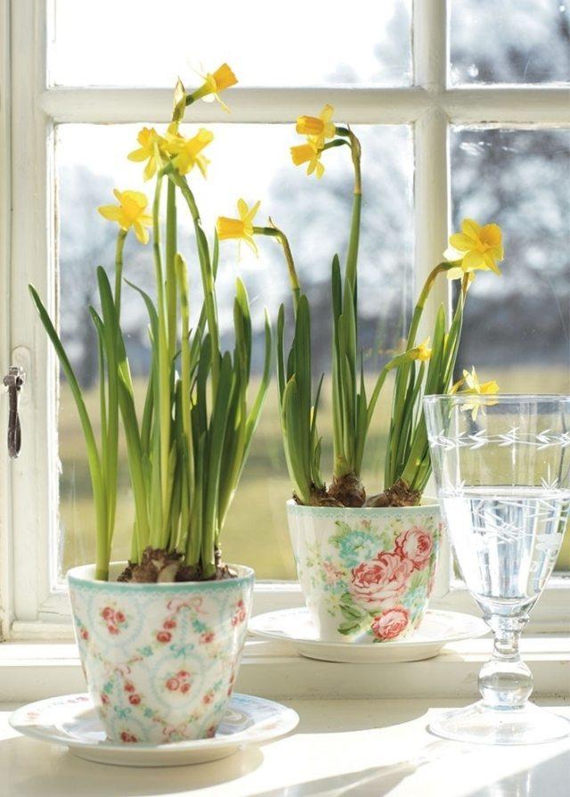 Tipps rund um die Pflege von Narzissen im Garten und im Blumentopf