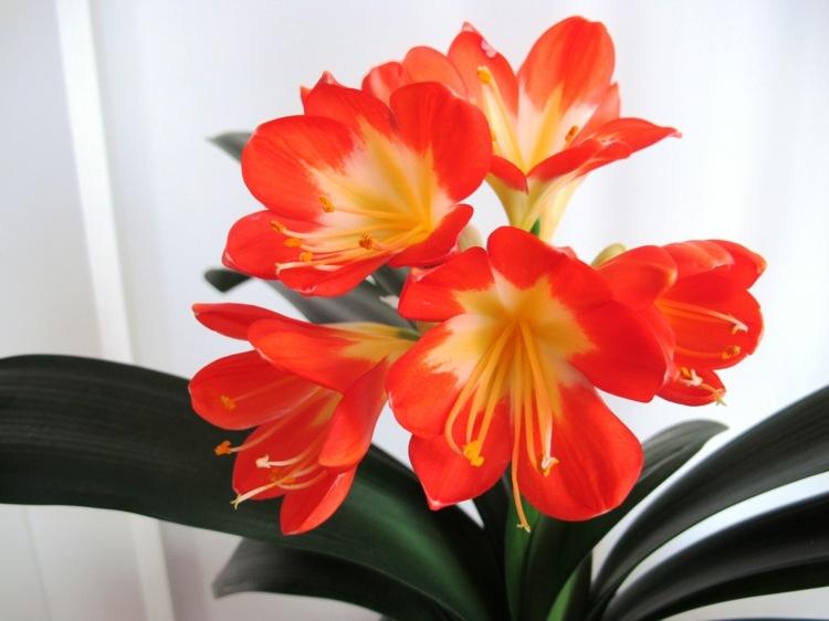 6 blhende ZimmerpflanzenArten fr ein schnes Zuhause im