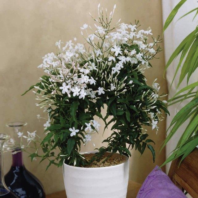 6 blhende ZimmerpflanzenArten fr ein schnes Zuhause im Winter