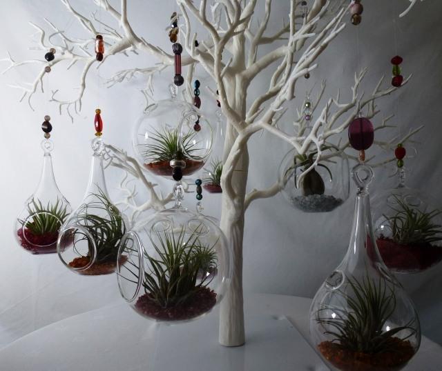 Wurzellose Luftpflanzen in Terrarien  Tillandsien richtig