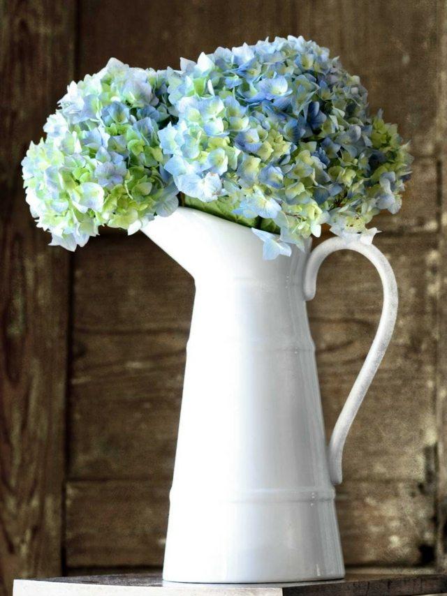 Hortensien Pflege  was Sie ber die schnen Blumen wissen mssen