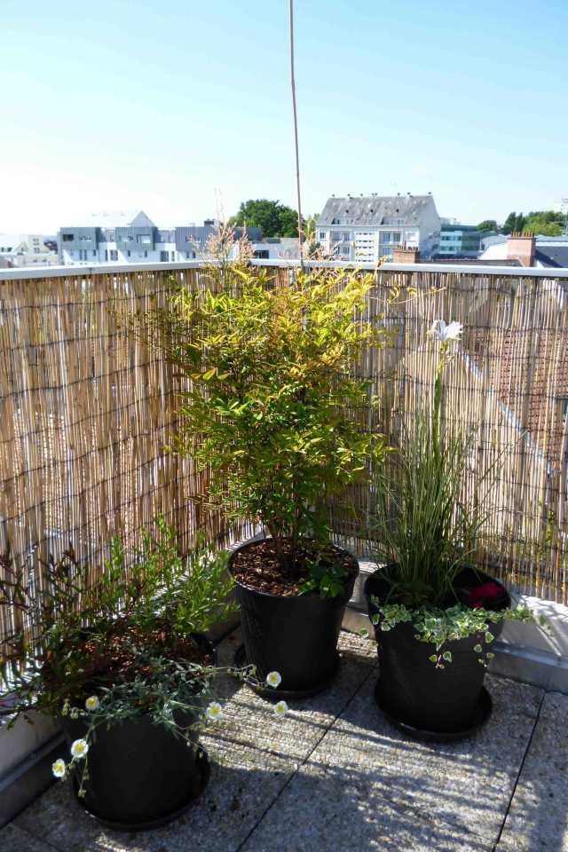 Bambus Als Balkon Sichtschutz Ideen Mit Pflanzen Matten Und ... Bambus Balkon Sichtschutz Ideen