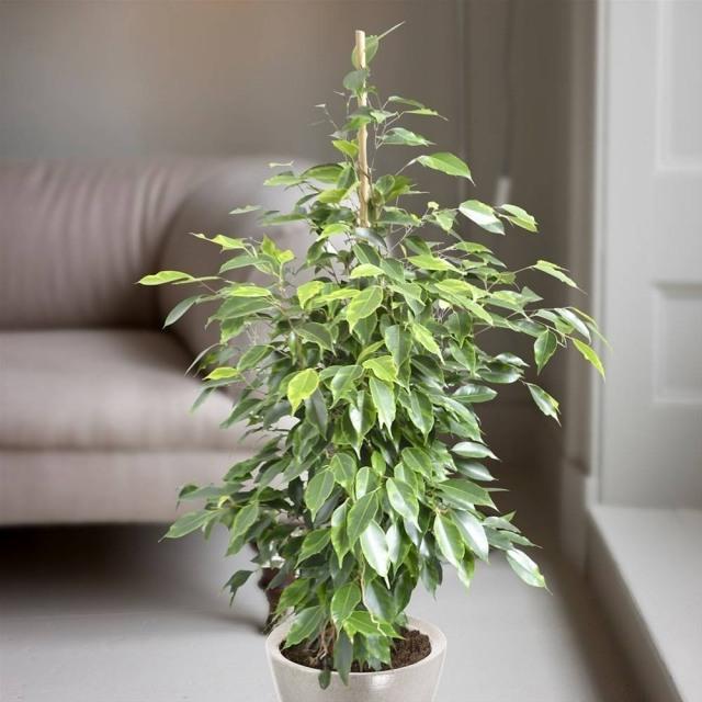 Zimmerpflanzen Pflege  Welche Pflanzen gut zu Ihrem Haus passen