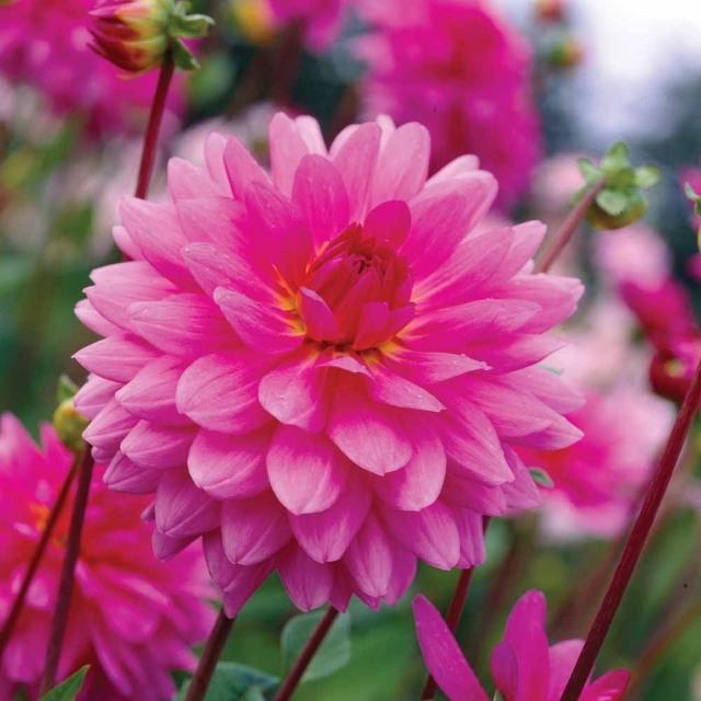 Frische Schnittblumen aus dem Garten  Welche Blumen eignen sich
