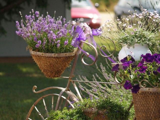 Pflege Tipps Für Den Lavendel Im Garten –wann Muss Man Ihn Schneiden?