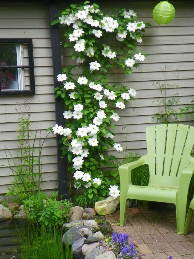 spalierobst im garten fassade mauer pflege tipps sorten, Terrassen ideen