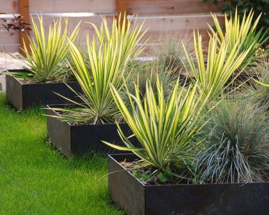 sichtschutz pflanzen graser graser im garten gestaltungsideen,