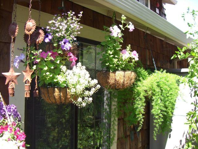 hangepflanzen balkon schone deko pflanzen - boisholz, Gartengerate ideen