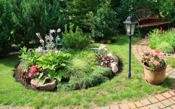 Winzige alpine Pflanzen fr Steingarten  Tipps zur Auswahl  Pflege