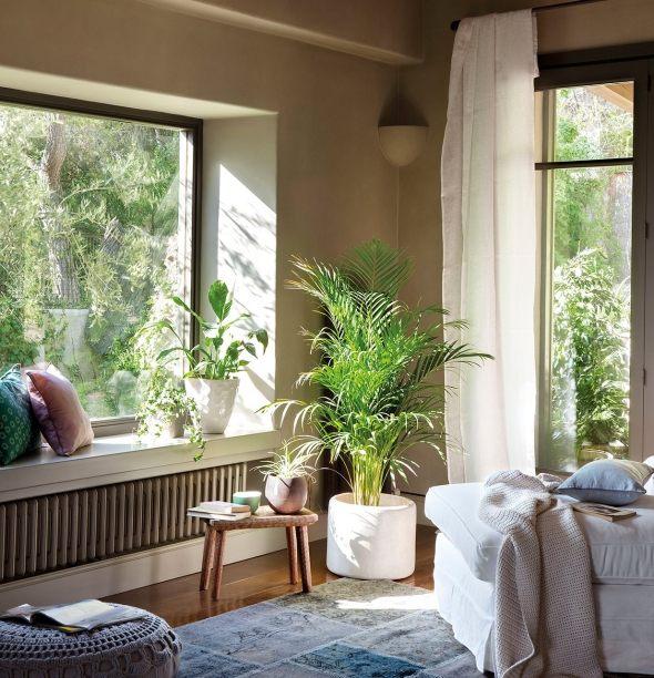 Gutes Licht fr die Zimmerpflanzendie fr dunkle Pltze geeignet sind