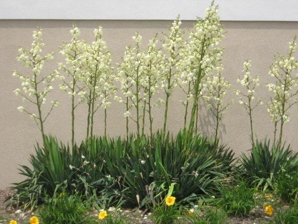 Die besten Pflanzen fr sonnigen Standort im Garten