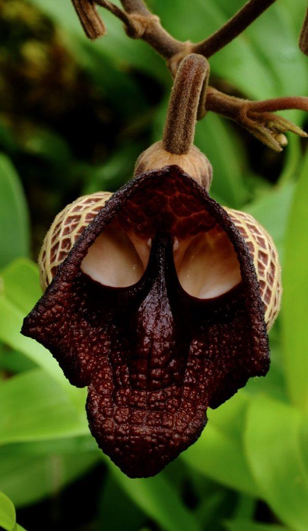 27 hbsche Orchideen und Blumen mit origenellen Formen