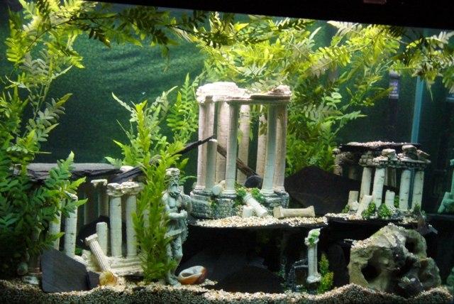 Deko fr Aquarium selber machen  30 kreative Ideen