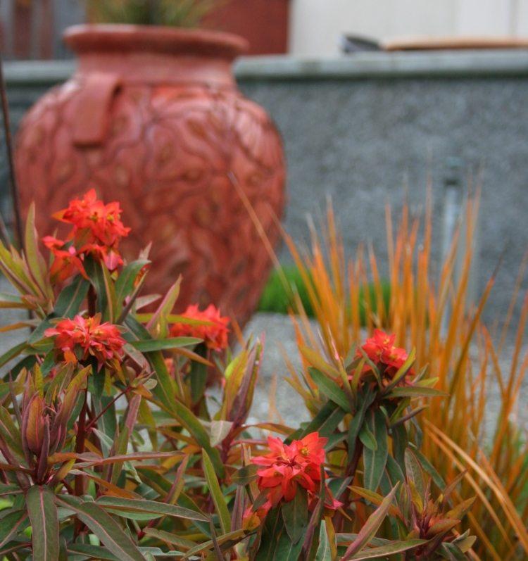 Mediterraner Garten  Beispiele fr Blumen und Pflanzen