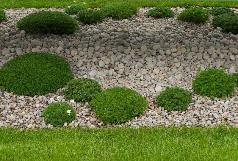 Gartengestaltung Pflege Landschaftsbau Kiesgarten Anlegen Gestaltungsideen L