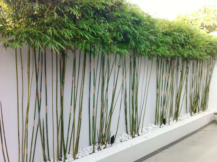 bambus kubel sichtschutz terrasse | möbelideen, Terrassen ideen