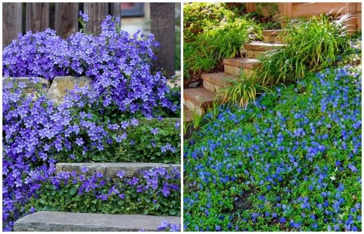 bodendecker pflanzen und pflegen - terrasseenbois, Terrassen ideen