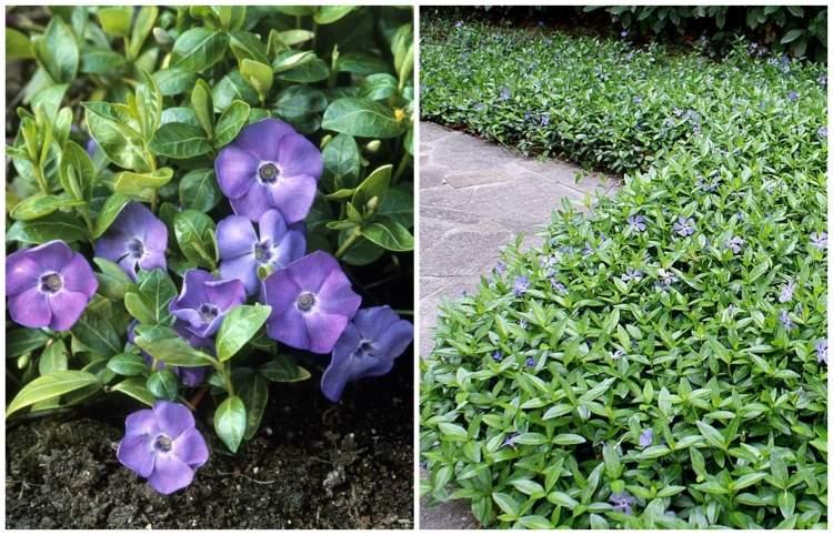 bodendecker pflanzen und pflegen - boisholz, Terrassen ideen