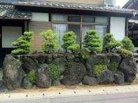 Bonsai Baum im Zen Garten - Gestaltungsideen