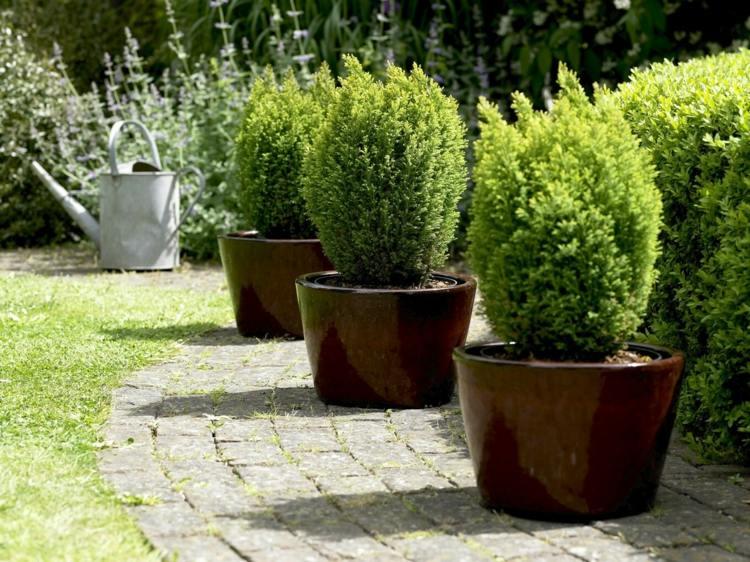 Hecke im Garten als Sichtschutz  Eine Variante zum Zaun