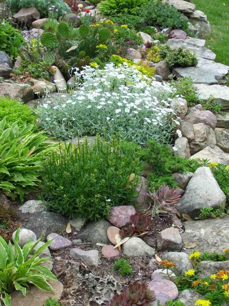 Pflanzen fr Steingarten  Welche eignen sich am besten