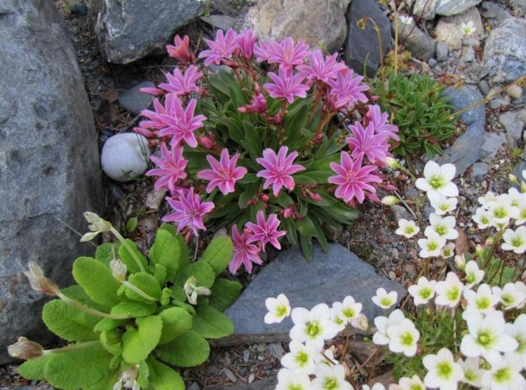 winterharte pflanzen fur steingarten - boisholz, Terrassen ideen
