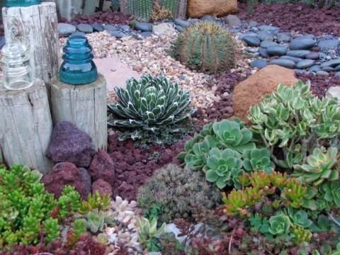 pflanzen für steingarten pflanzen für steingarten - welche eignen sich am besten?