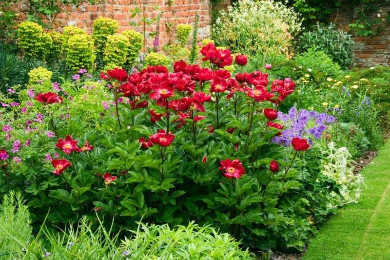 duftpflanzen im garten – blumen und kräuter kombinieren – menerima, Terrassen ideen