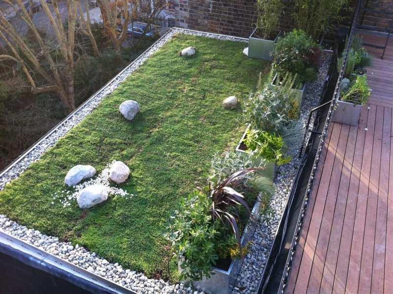 Pflanzen fr Dachbegrnung  traumhafter Dachgarten