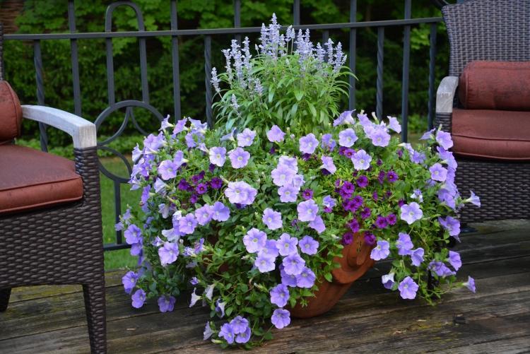 Sommerblumen im Garten  45 BlumentopfArrangements
