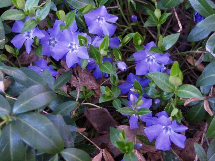 Bodendecker fr Schatten  10 Pflanzen die sich gut eignen