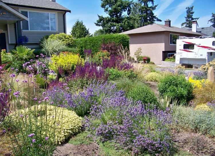 Mediterrane Gartengestaltung Lavendel Bodendecker Haus Vorgarten Haustuer Straeucher