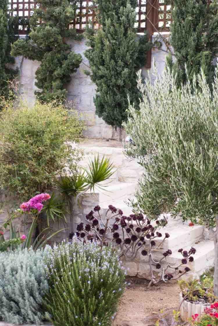 Mediterrane Gartengestaltung und Pflanzen  75 Ideen