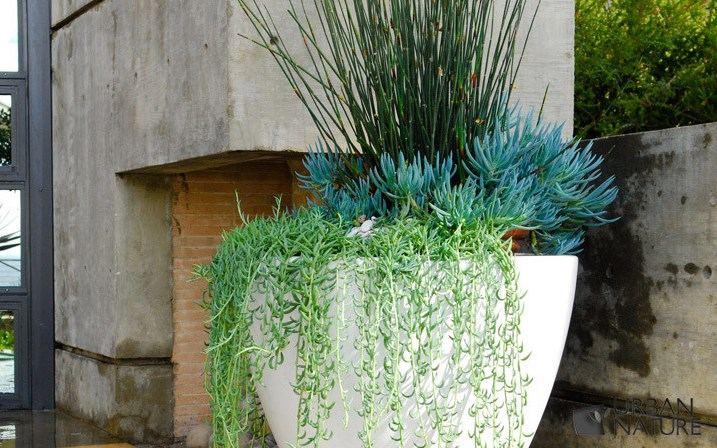 Pflanzen Topfen Kubeln Terrasse