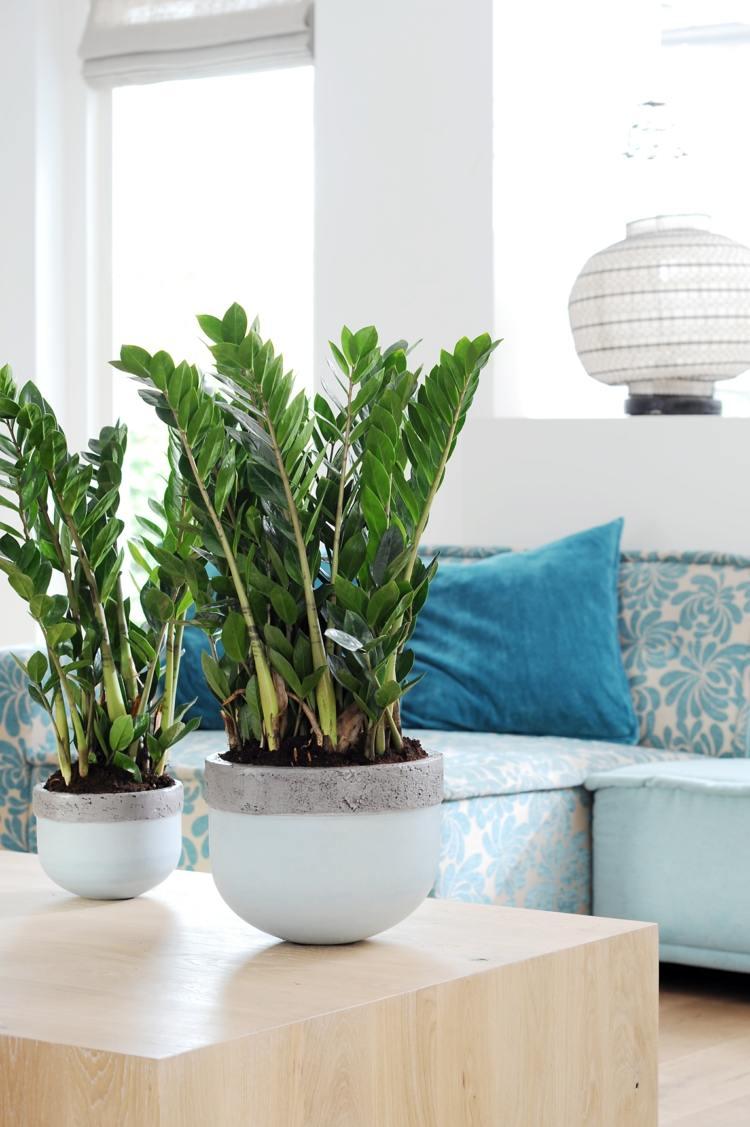 Zimmerpflanzen fr wenig Licht  25 grne und blhende Arten